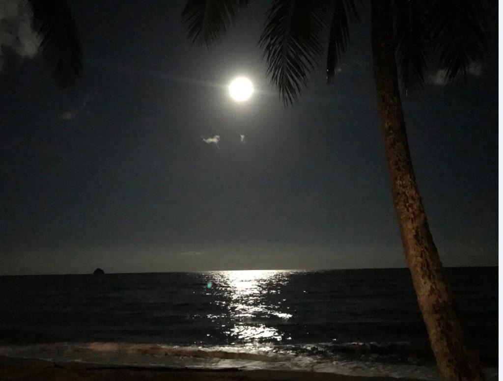 パームコーブ月明り1