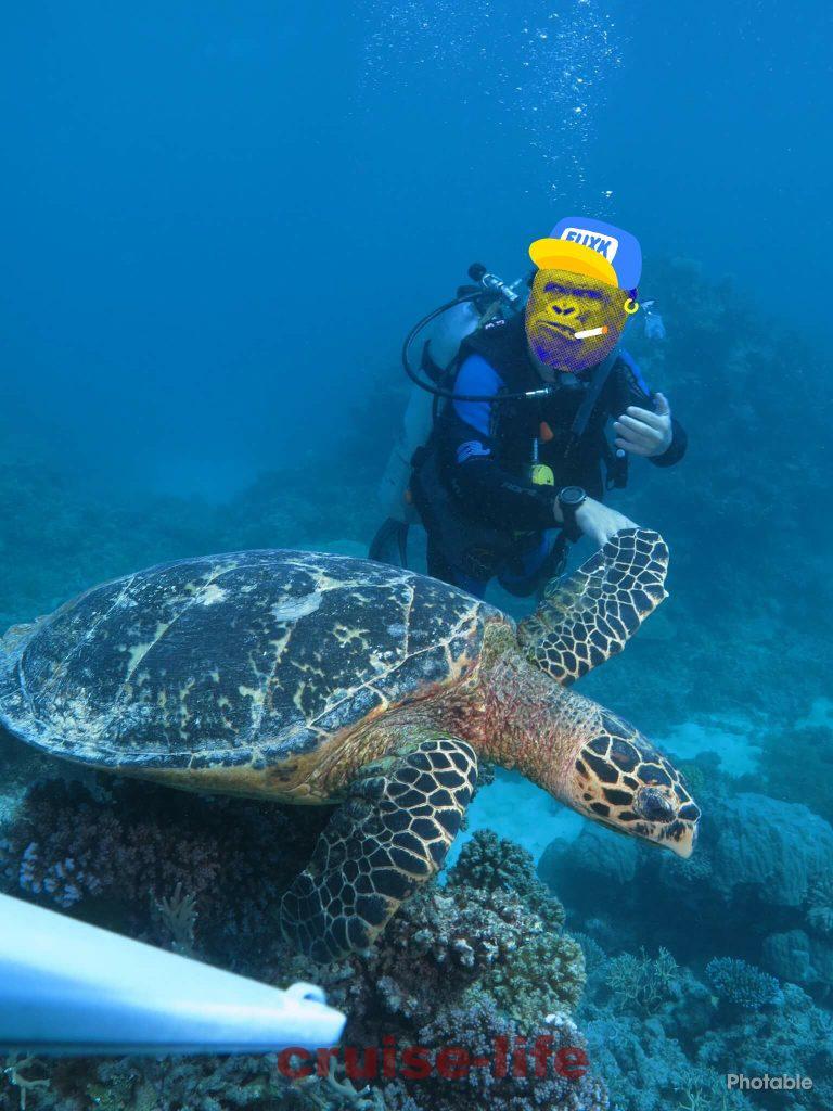 オーストラリアの海でのダイビング